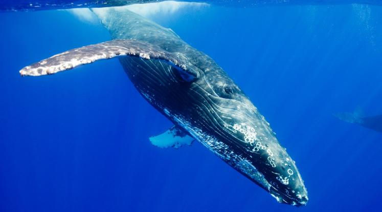 シロナガス鯨のお話 | 氣愛塾
